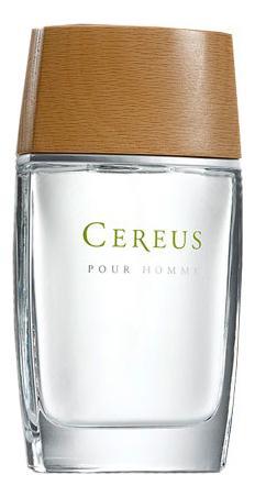 Cereus No4